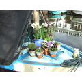 prow garden narrowboat