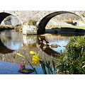 dartmoor bridge reflection daffodils ducks