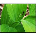 black green nature leaf ant insect outdoors macro
