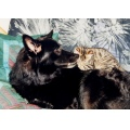 Animal Animals Dog Dogs BlegiumSheperd Bonita Cat Cats Greytiger Anastasja