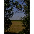 nature landscape bush tree field sky window
