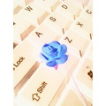 negative flower yellow blue keyboard computer rose