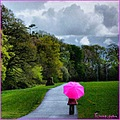 umbrella pink rain irish weather park