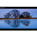 New Forest water reflection pond oak trees nature captivelight