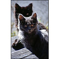 cute wild forest kitten kittens young two 2 heads animals old film slide scan