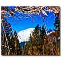 reflection mt shasta pond lake water