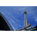 sports people baseball BlueJays CNTower Toronto