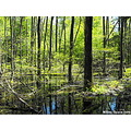swamp nature scenery woods reflection