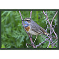 Back to birds...