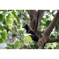 crow tree mumbai bird india