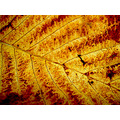 leaf abstract pattern lines veins textures nature trees macro