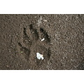 Nature Paw print ground