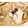 ant insect bug creepy