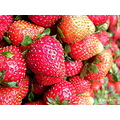 pinkish red strawberries