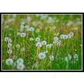 favesongs meadow field flowers dandelions nature somerset somersetdreams