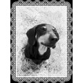 Cindy sausage dog frame black white