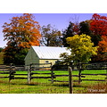 fall colours barn farm Ontario Canada trees crazy8s