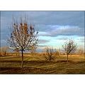 landscape winter field hill tree bush celestial phenomenon sky clouds