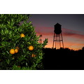 Water towers orange groves Floridas sunset