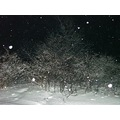 Its still Snowing here...I love taking snow pictures at night