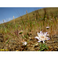 Wild Flower Iran Nature