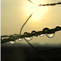 dew fog grass chickenwire sunset