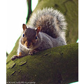 wildlife squirrel nature close up