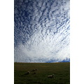 Clouds and Sheep
