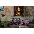 The window, the bicycle and the flowers.