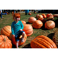 granddaughter pumpkin fall