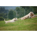 West Midlands Safari Park England UK dotGALLERY
