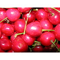 cherries nature fruit macro