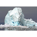 Arctic sledge dog Iceberg Arctique Traineau Chien Glace Ice