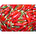 Chili capsicum... yummy treat for Bicolanos :D