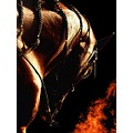 arabian horse fire collage