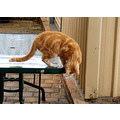 animal cat jasper rain drops table perth littleollie
