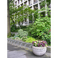 seattle seattlefph park freewaypark tree green path shrubs planter