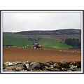 Tractor land seagulls
