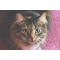Emma 7 years old Docile and loving