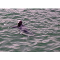Sea Lion St Ives Cornwall England Rob Hickey 2011