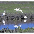 reflectionthursday roncarlin SJWildlifearea Bird