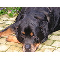 This dog was Kay, he died 5 years ago on the age of 10 years.