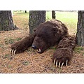 dead bear simulation imitation grizzly bear props bear attack props