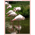 flamingo bird zoo nature CH1988