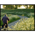 spring landscape nature tree holland bike CH1988