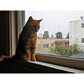cat joeyfph window windows december winter rain