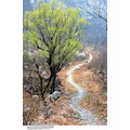 china outdoor spring nature tree lane landscape