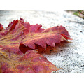hoja tree leaf otoo autumn fall colores colors cnthparada