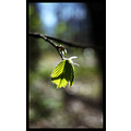 nature branch offshoot leaf green spring bokeh