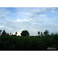 landscape nature thailand poulets 2007 rural morning